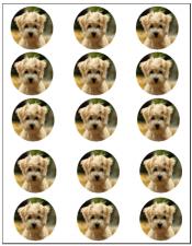Cupcake - Custom Edible Image 15 Per Page