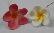 Flower - Frangipani - Medium - Coloured